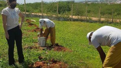 """planta 390x220 - Secretaria de Meio Ambiente inicia projeto """"Muda Vidas"""" com plantação de 30 espécies frutíferas no presídio de Patos"""