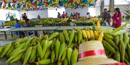 milho - Agricultores, cozinheiras e artesãos vivem expectativa para o V Festival do Milho da Cecaf