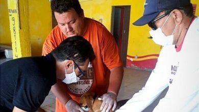 cao 390x220 - FAZENDO O BEM: Prefeitura de Aparecida realiza pela primeira vez quimioterapia em cão que vive nas ruas para combater a patologia.
